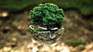 naturaleza-circular